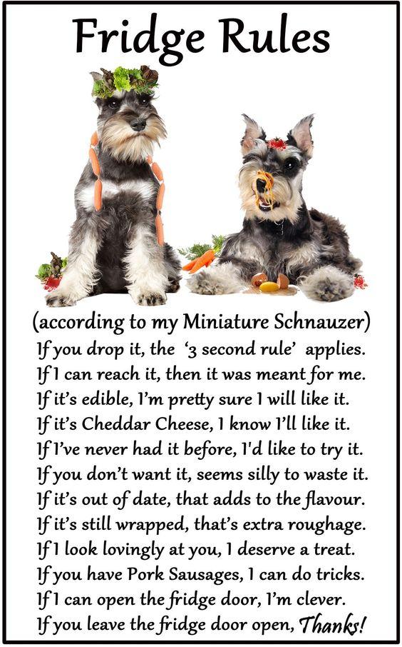 Miniature Schnauzer Fridge Rules