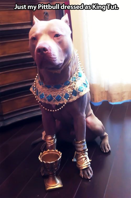 Need to make this costume for my doggies. Too cute!