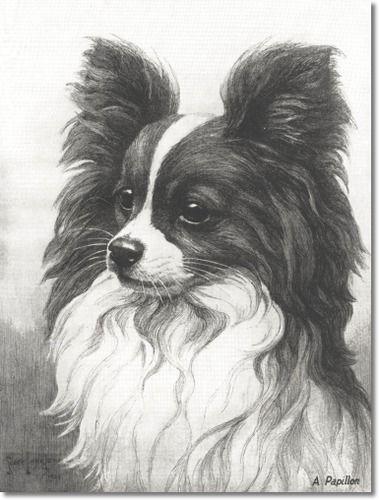 Nina Scott Langley - Hutchinsons Book Of The Dog - Nina Scott-Langley - Papillon Painting