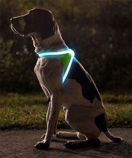 Noxgear LightHound: Illuminated dog vest. #Dog_Light_Vest #LED #Fiber_Optic