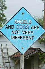 Or maybe dogs are angels?