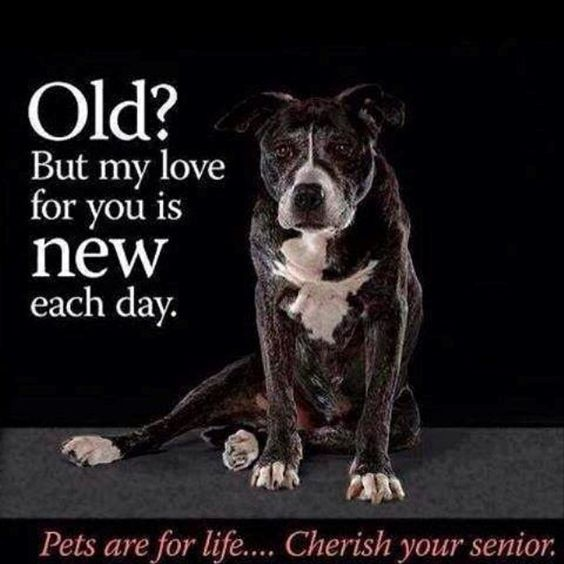 Pets are for life! Cherish your senior!