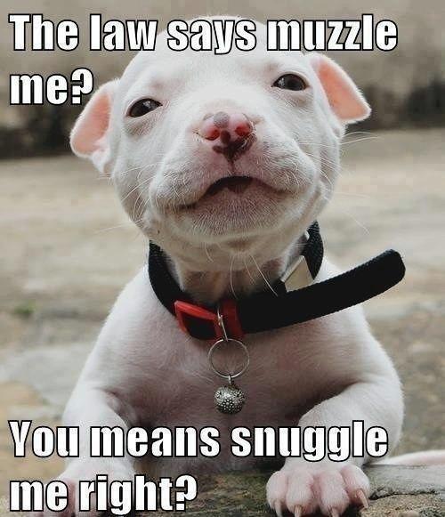 Pitbull Puppy Snuggle