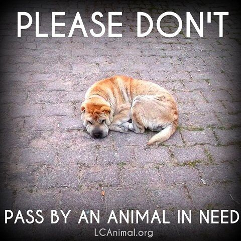 Please don't pass by an animal in need. #dogs #helpinganimals #animalwelfare #adoptdontshop