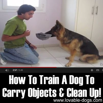 Please Share This Page: Photo –  Training your dog can be a difficult task, but this video by Training Positive makes it all worth it. In the tutorial, he teaches us how to ask your dog to carry objects and clean up. If you can help your dog learn how to pick up after …