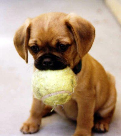 Pugalier! I would love one of these.