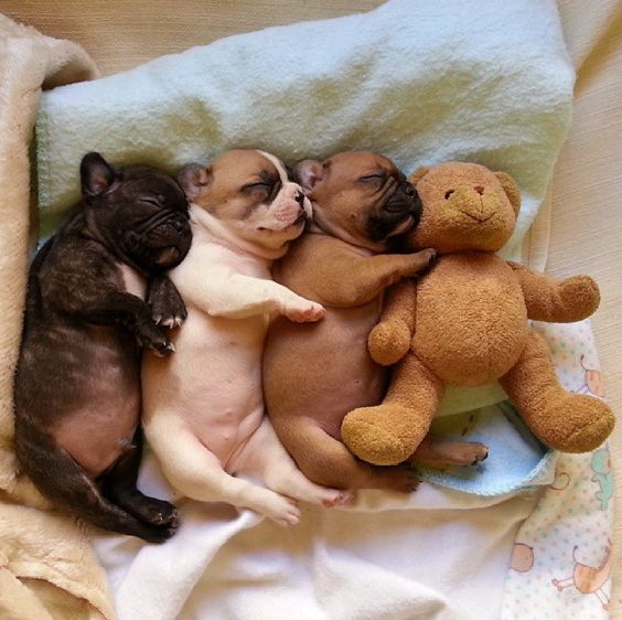 PUPPIES IN A ROW CUDDLING EACH OTHER AND TEDDY BEARS.