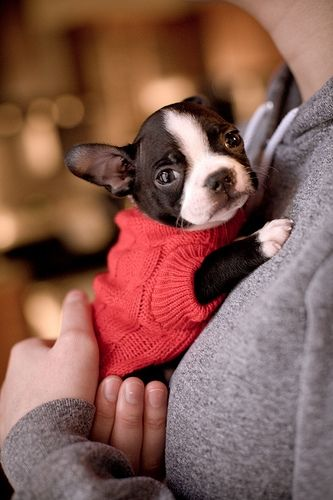 PUPPIES!!! pet-fashions-dog-clothes-accessories-and-more