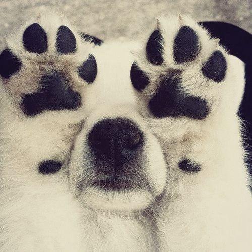 Puppy paws ♥