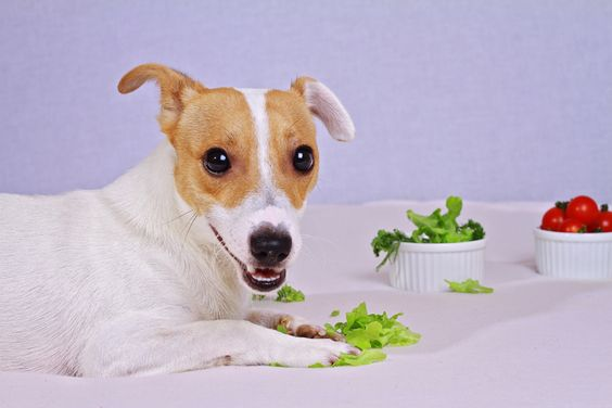 Whether you make your dog's meals from scratch, are looking for new and healthier treats for her or just want to supplement Spot's diet with some low-fat, vitamin- and mineral-packed choices, adding fruit and veggies is an easy way to rev up your dog's usual meals and treats.