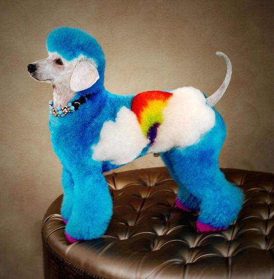 Rainbow Poodle  blue dog