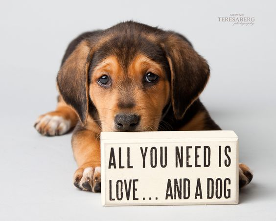 Rescue dog photography with sign