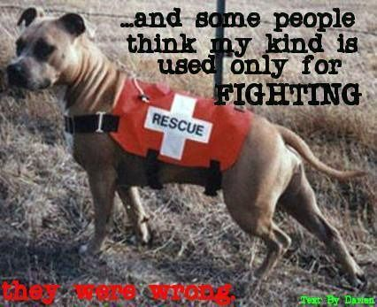 Rescue Dog - Pit bull~♥ ~