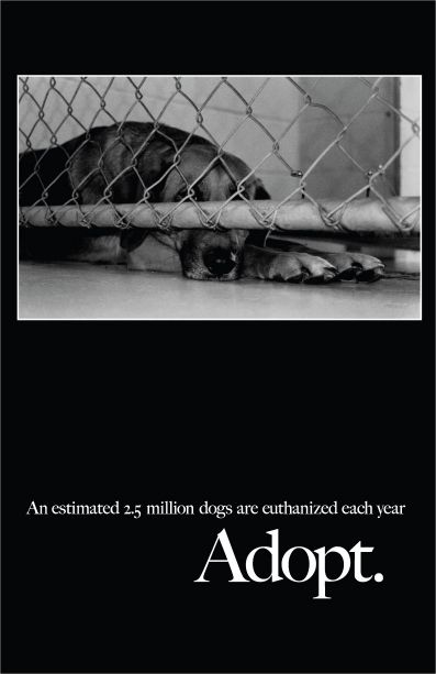 Save a life. Adopt a shelter dog! Can't imagine life without mine :)