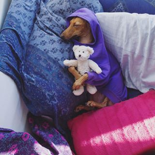 She's even stylish in her sleep! | This Canadian Dog Is Better Dressed Than Anyone In Canada, TBH