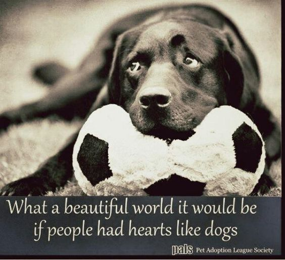 So true, and I am not even big on dogs.  If only people had hearts like
