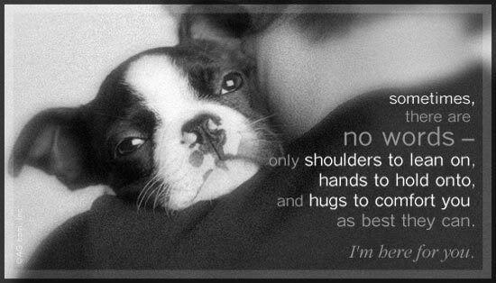 So true - Boston Terrier
