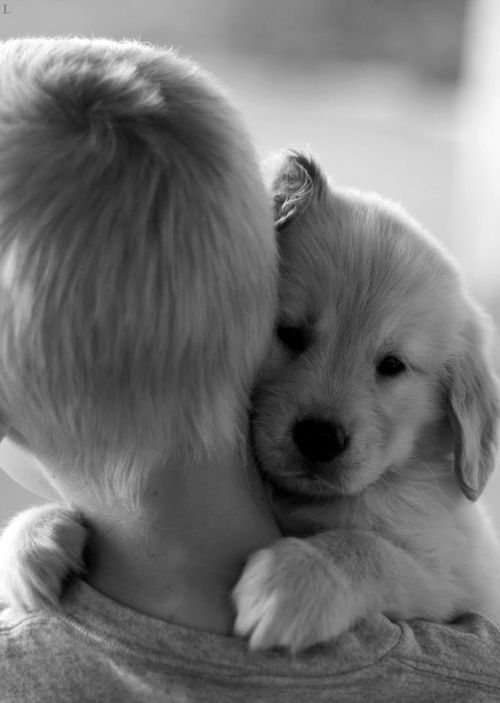 Sweet puppy love!