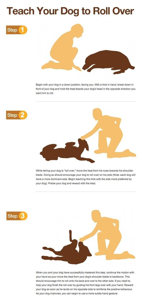 Teach your dog to roll over infographic