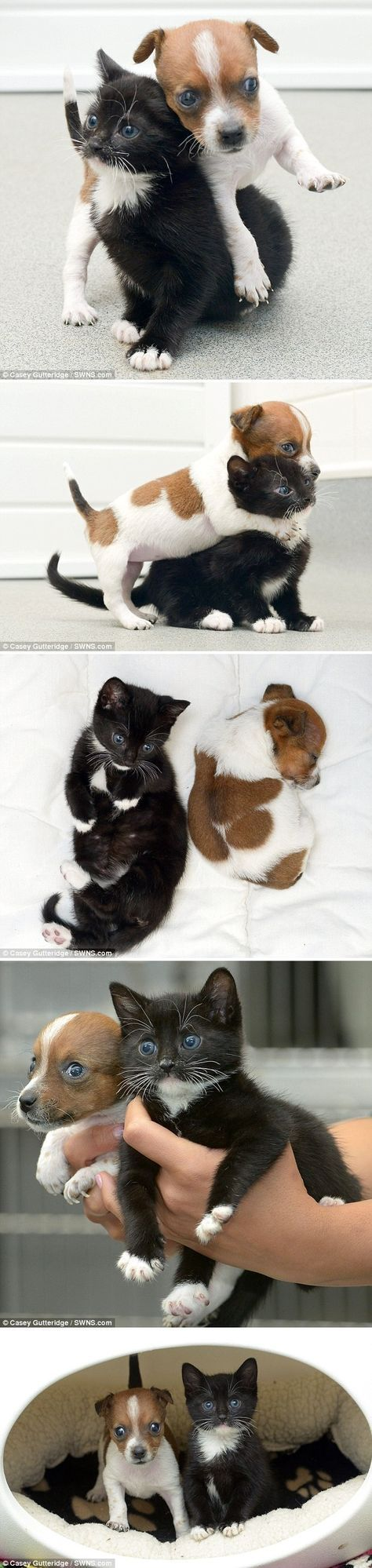 The best part? This rescue cat and dog duo will grow up to be about the same size. ♥
