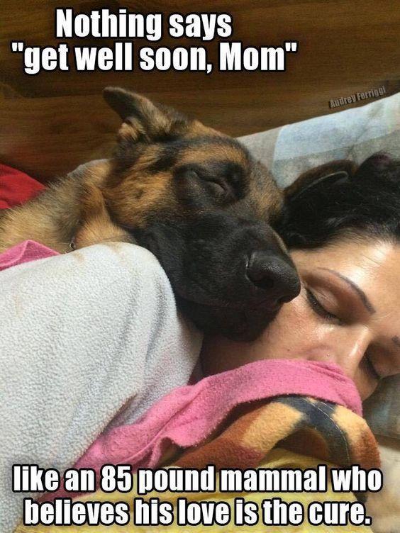 The German Shepherd, 85 lb., try 100,  :)
