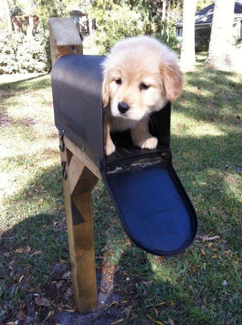 The greatest mail delivery that has ever happened. | 61 Images Of Animals That Are Guaranteed To Make You Smile