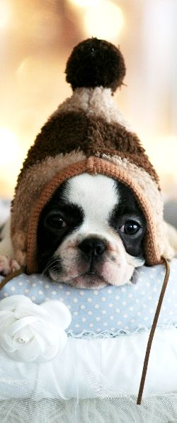 The hat this dog is wearing, reminds me of this one picture of my friend Robyn with her head stuck in her baby brothers little  picture ever!!!!