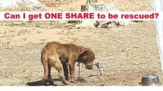 The heartbreaking photo was snapped in the town of Boron, California. This helpless animal spends all day living on a chain,...