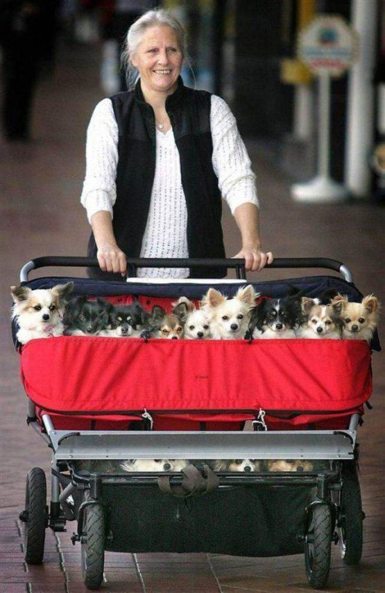 the most dogs--saw a woman doing this in  new twist on