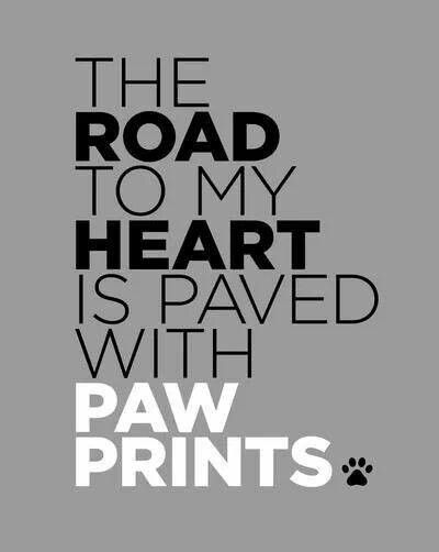 The Road to my heart is paved with paw prints #petquotes #dogfordog