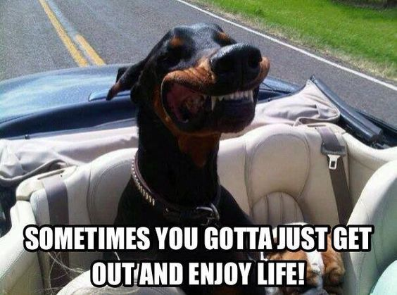 The sad thing is, my Doberman makes this face when he rides in the truck