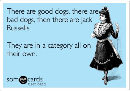 There are good dogs, there are bad dogs, then there are Jack Russells. They are in a category all on their own.