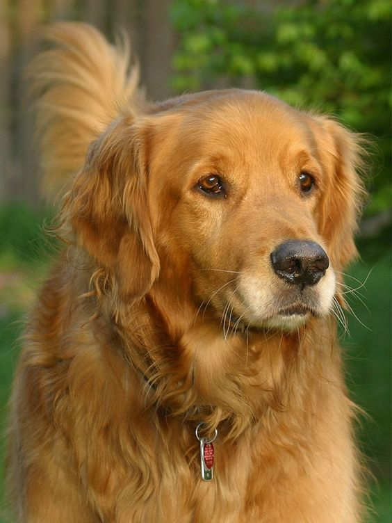This dog is so pretty!