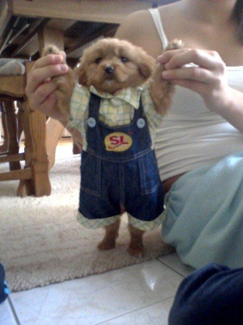 This gentleman all dressed up in his nice overalls  These photos are so cute!