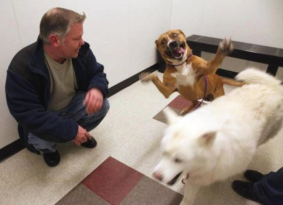 This guy who was pretty happy to finally be adopted.   19 Dogs Who Will Make Literally Anyone Happy