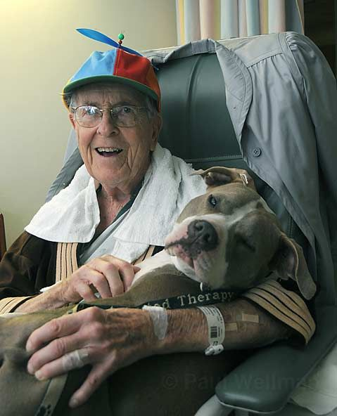 This is Daisy Mae, a former dogfighting dog who cuddles with the elderly and frail, and even allows small children to hold her tight when they are undergoing painful medical procedures. Spread knowledge, not prejudice.