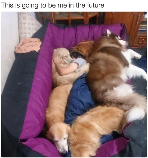 This is how I want to go to sleep. I just need to get 3 more large dogs. I'll be right back.