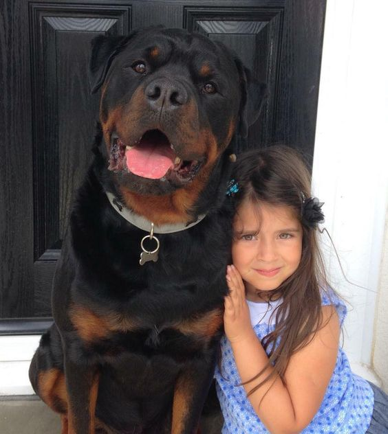 This is my human. Hurt her and I'll make sure you will never be found. Big beautiful rottie