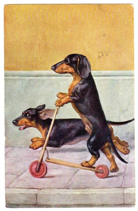 This not only is possible, its  pair, pound for pound, pull as hard as any two sled  should be a dachshund division in the Iditarod!
