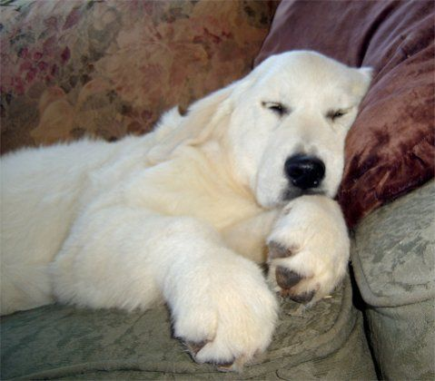 those paws! Dog or Polar bear? My husband was just commenting on how much our new puppy looks like a Polar Bear!