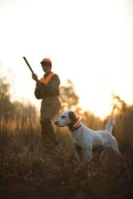 Tips for training bird dogs and hunting dogs | George Hickox