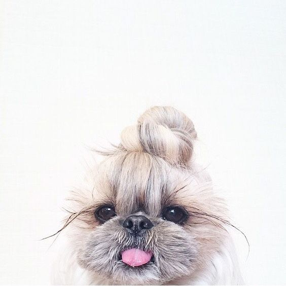 Top knot pup