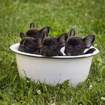 Tub-o-frenchies ♥