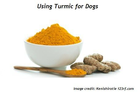 Turmeric for Dogs: What, Why and How to Use It | Your Old Dog