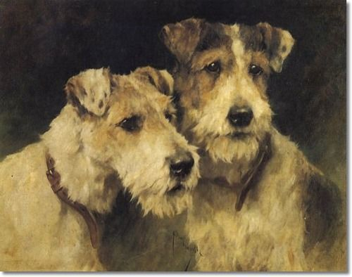 Two Wire Haired Fox Terriers by Arthur Wardle