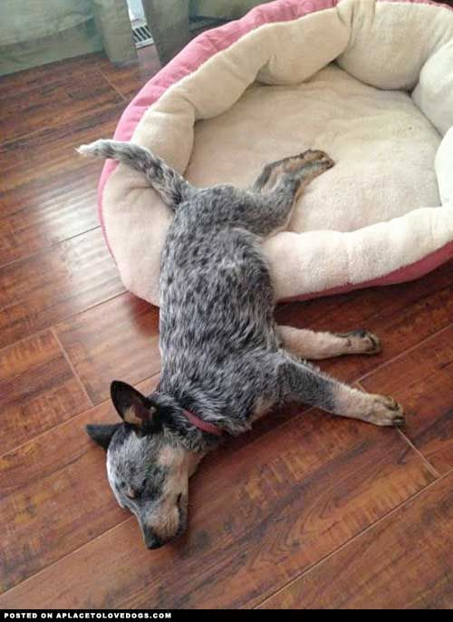 Typical ACD. A move Diesel is familiar with technically