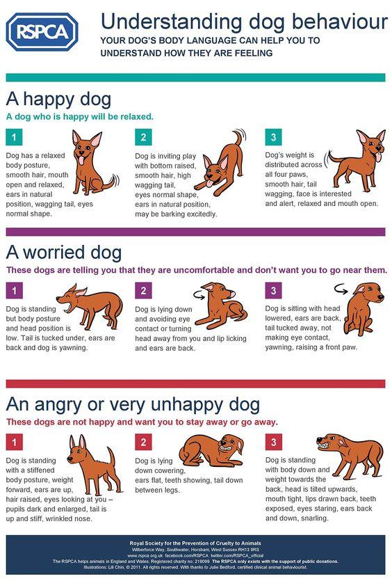 Understanding Dog Behaviour