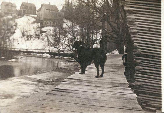 vintage photo Dog Looks out to River from Wooden Sidewalk