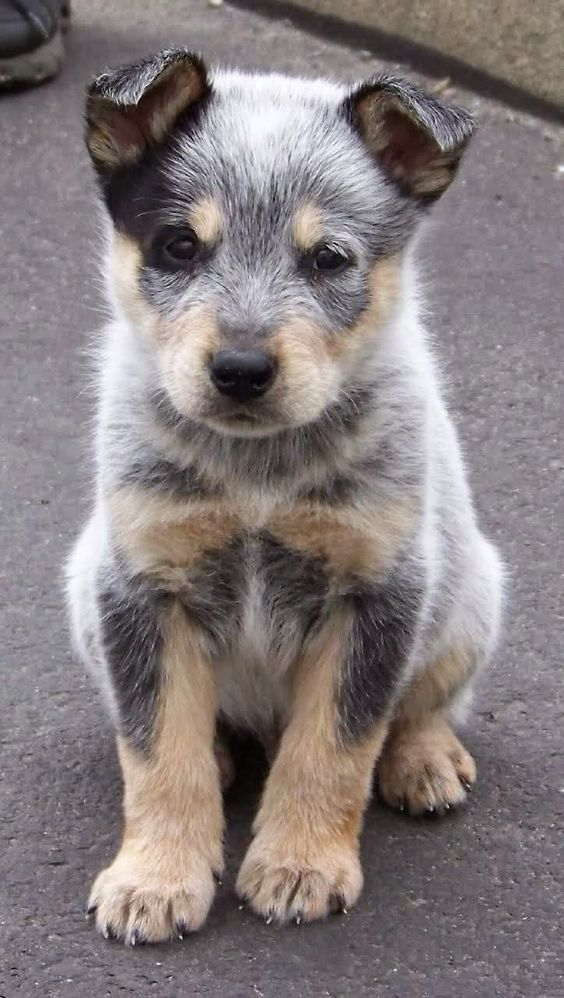 Wait! A puppy? How? I can only do Bird wolf cat (obviously)  And dog.