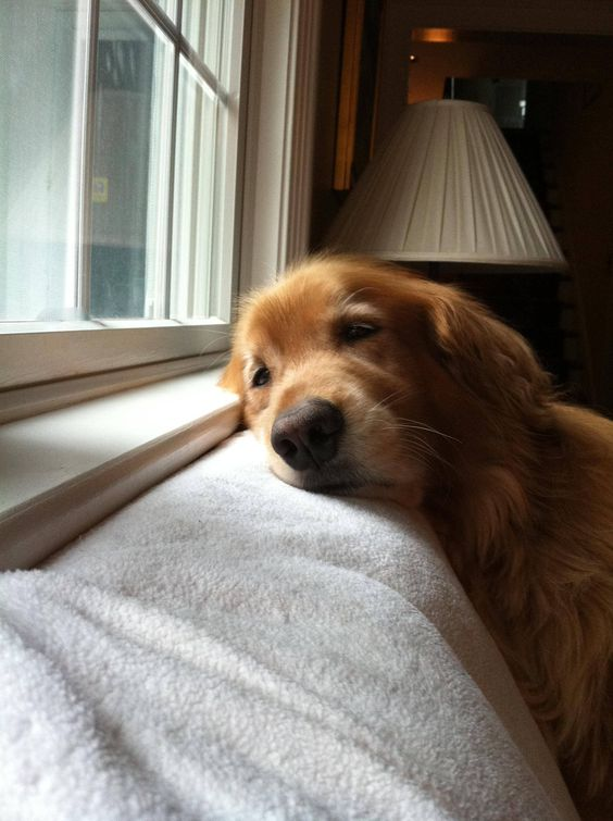 Waiting for you to come home. Awww!